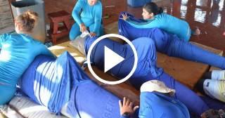 Cuba: Regresan a Cayo Guillermo los seis delfines evacuados por el huracán Irma