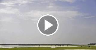 Lo nunca visto: Pelea entre un caballo y un cocodrilo en la Florida