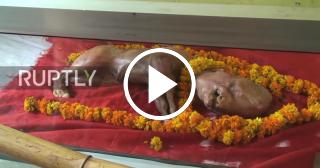 """Becerro con """"rostro humano"""" es venerado como un Dios en la India"""
