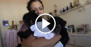 Bióloga cubana cría chimpancés en su casa en La Habana y los trata como si fueran sus hijos