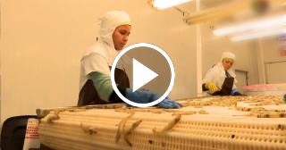 Principal camaronera cubana rompe récords: el 93% de sus camarones son para Europa