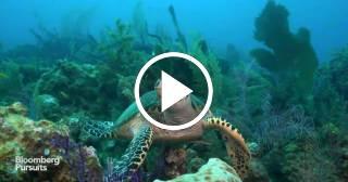 Cuba: Buceando entre tiburones, en Jardines de la Reina