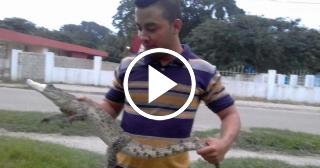 Capturan en plena calle de Sancti Spíritus un cocodrilo