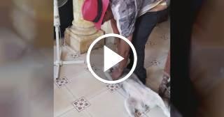 Descemer Bueno pierde a su perrita Agua y pide ayuda para encontrarla