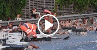 Miles gallinas quedan libres en la autopista tras un accidente en Austria