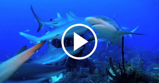Jardines de la Reina: Un archipiélago salvaje de Cuba donde prosperan los tiburones
