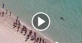 Un enorme tiburón se acerca a la orilla en una playa de Miami