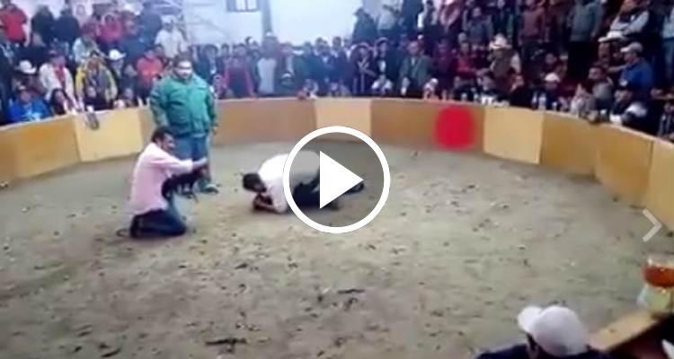 Sus primeros clips de gallos