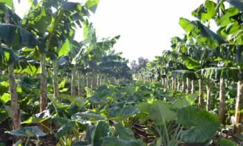 Científicos cubanos crean variedades de vegetales resistentes a los cambios climáticos
