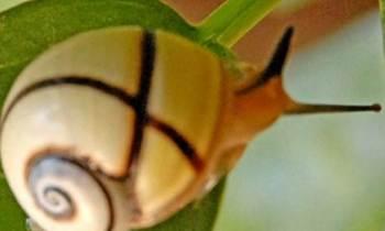 Amenazadas de extinción 36 especies de la fauna cubana