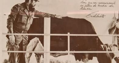 Una de las imágenes más famosas de la vaca y Fidel