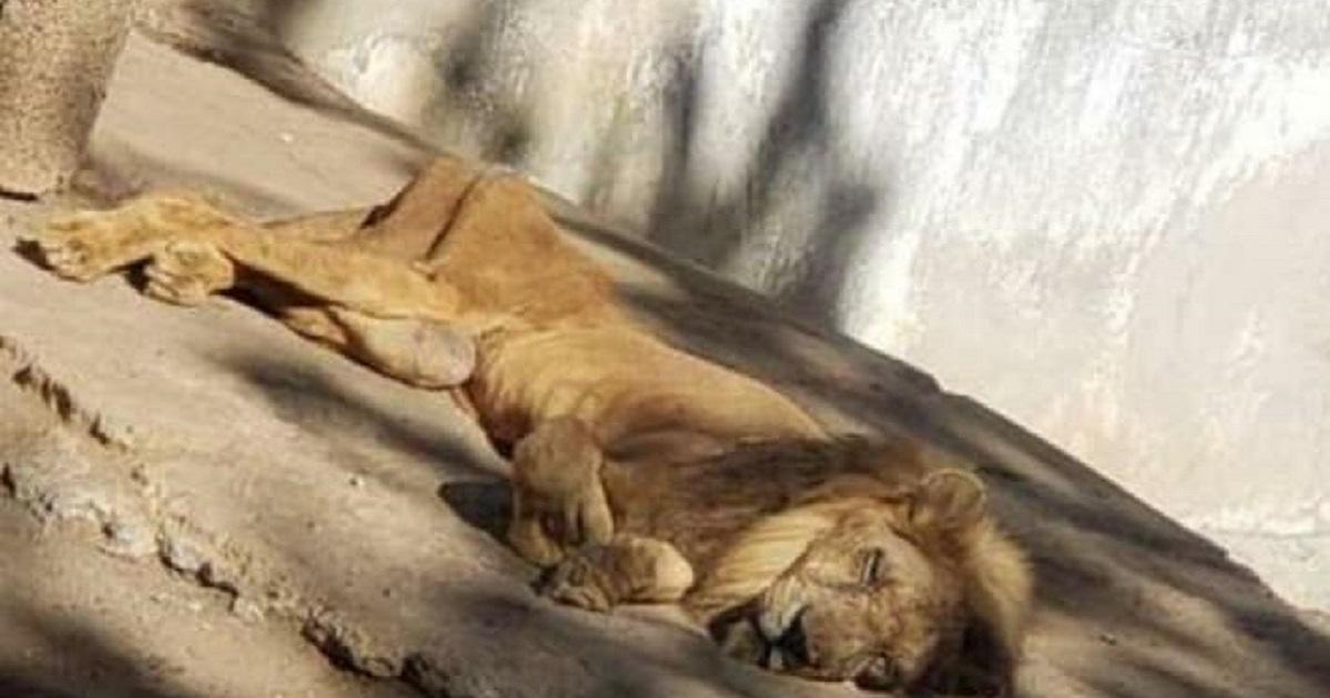 Facebook / Cuba contra el Maltrato Animal